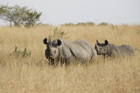 Poaching and Extinction: A Pressing Threat to Animal Rights